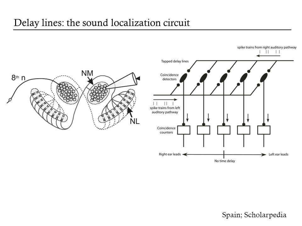 Spain; Scholarpedia Delay lines: the sound localization circuit