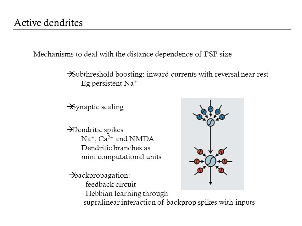 Mechanisms to deal with the distance dependence of PSP size Subthreshold boosting: inward currents with reversal near rest Eg persistent Na + Synaptic