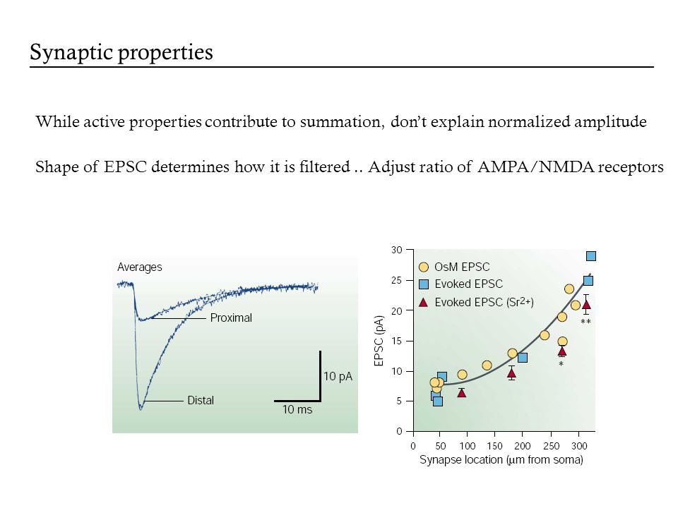 Synaptic properties While active properties contribute to summation, dont explain normalized amplitude Shape of EPSC determines how it is filtered.. A