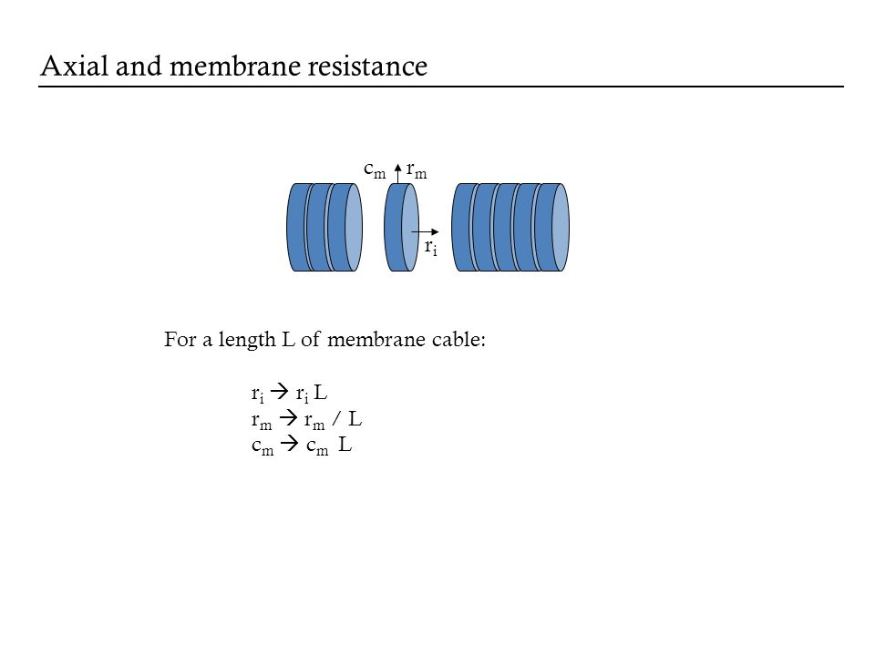 riri rmrm cmcm For a length L of membrane cable: r i r i L r m r m / L c m c m L Axial and membrane resistance