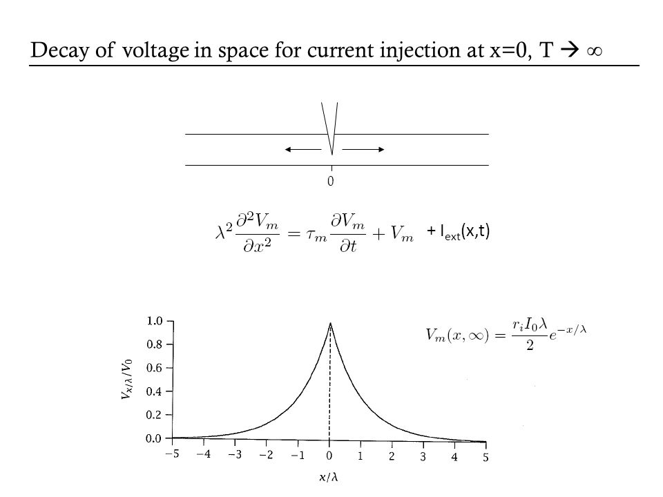 0 Decay of voltage in space for current injection at x=0, T + I ext (x,t)