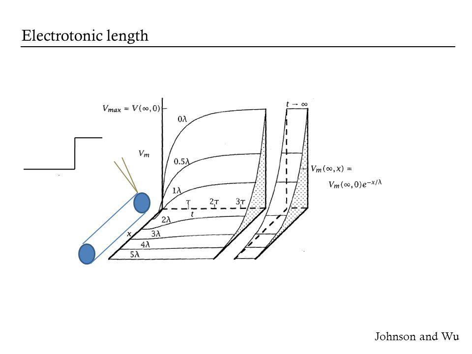 Johnson and Wu Electrotonic length