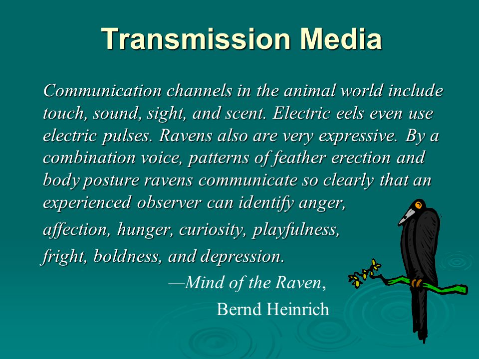 Transmission Media Communication channels in the animal world include touch, sound, sight, and scent. Electric eels even use electric pulses. Ravens a