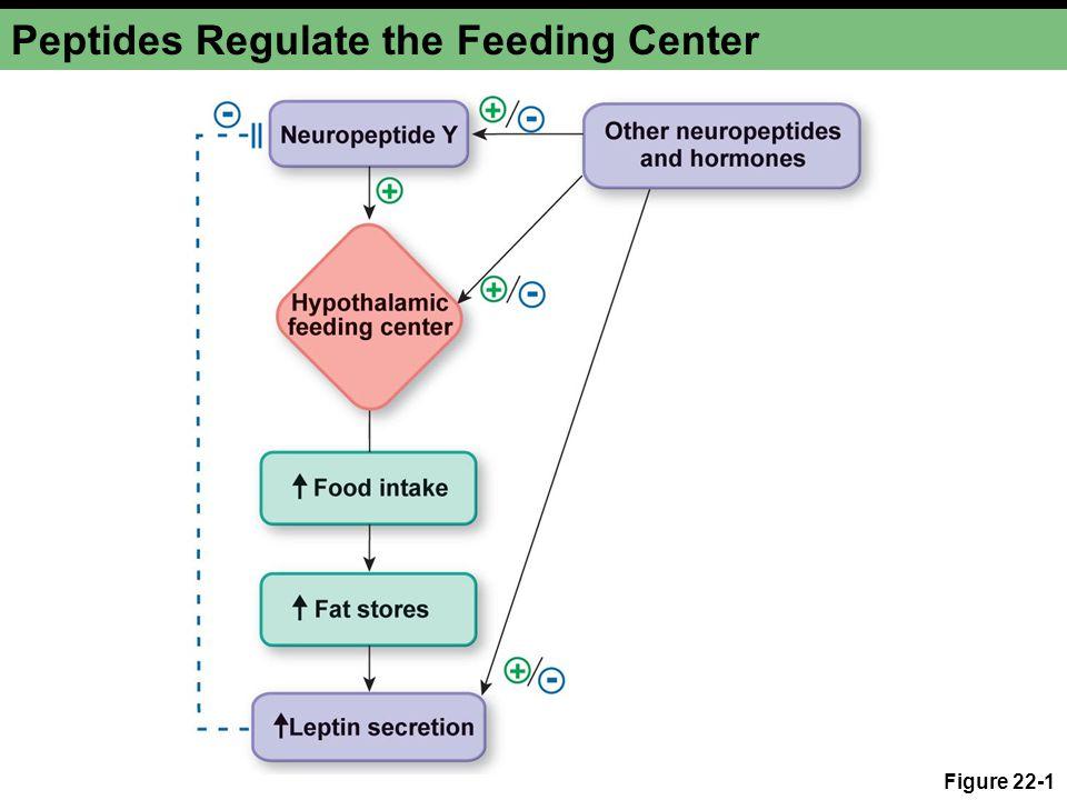Figure 22-1 Peptides Regulate the Feeding Center