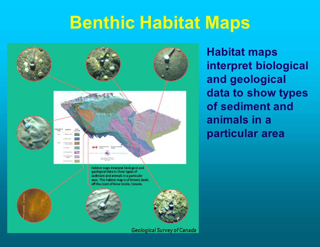 Benthic Habitat Maps Habitat maps interpret biological and geological data to show types of sediment and animals in a particular area Geological Survey of Canada