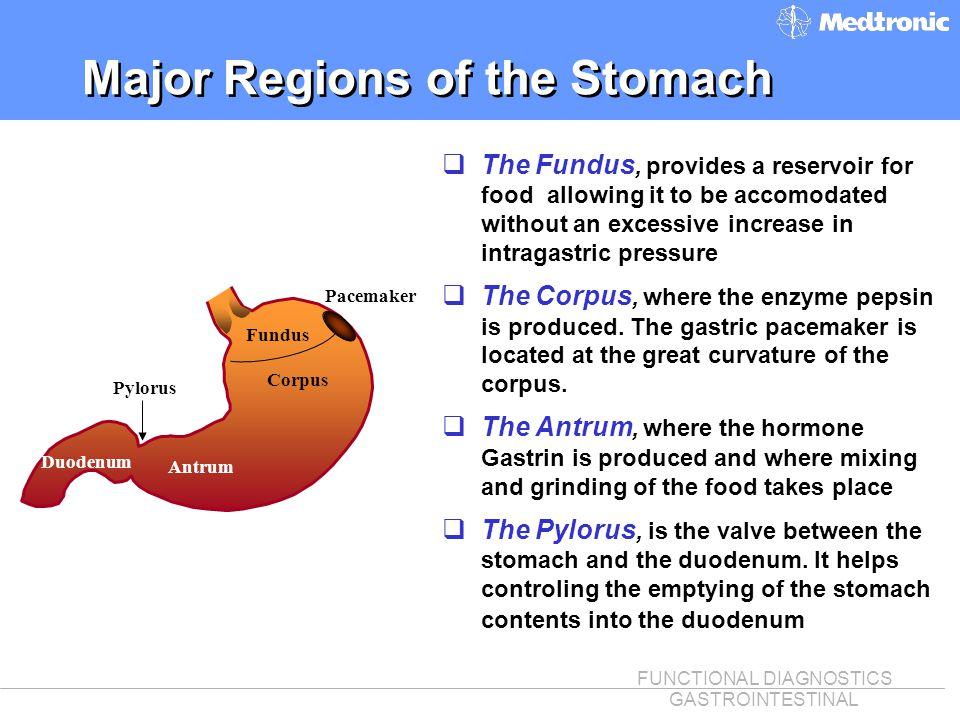 FUNCTIONAL DIAGNOSTICS GASTROINTESTINAL Major Regions of the Stomach Fundus Corpus Antrum Pylorus Pacemaker q The Fundus, provides a reservoir for foo