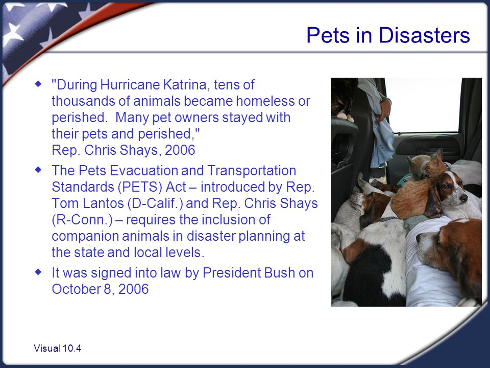 Visual 10.4 Pets in Disasters