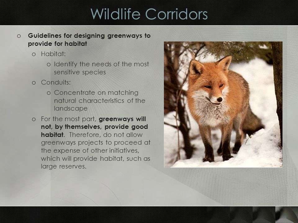 Wildlife Corridors o Guidelines for designing greenways to provide for habitat oHabitat: oIdentify the needs of the most sensitive species oConduits: oConcentrate on matching natural characteristics of the landscape oFor the most part, greenways will not, by themselves, provide good habitat.