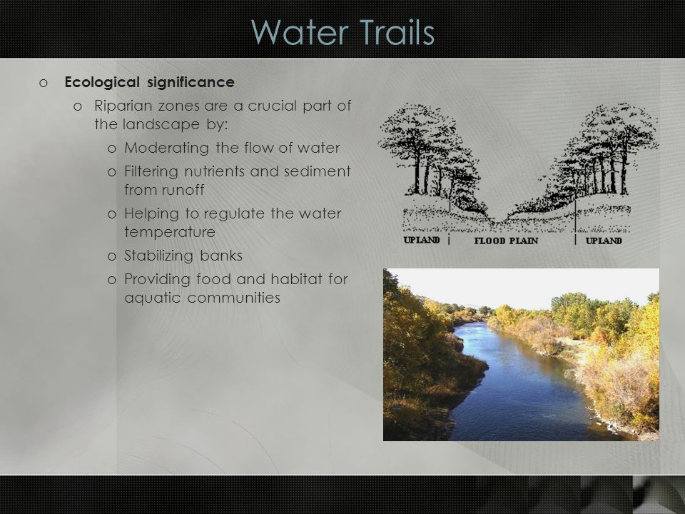 Water Trails o Ecological significance oRiparian zones are a crucial part of the landscape by: oModerating the flow of water oFiltering nutrients and sediment from runoff oHelping to regulate the water temperature oStabilizing banks oProviding food and habitat for aquatic communities