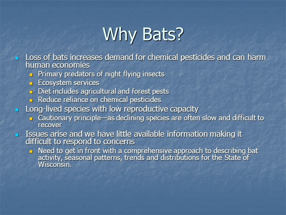 Why Bats? Loss of bats increases demand for chemical pesticides and can harm human economies Loss of bats increases demand for chemical pesticides and