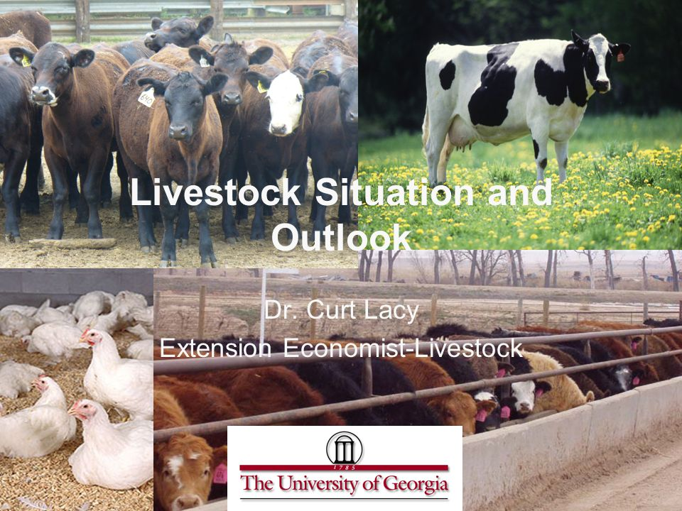 Livestock Situation and Outlook Dr. Curt Lacy Extension Economist-Livestock