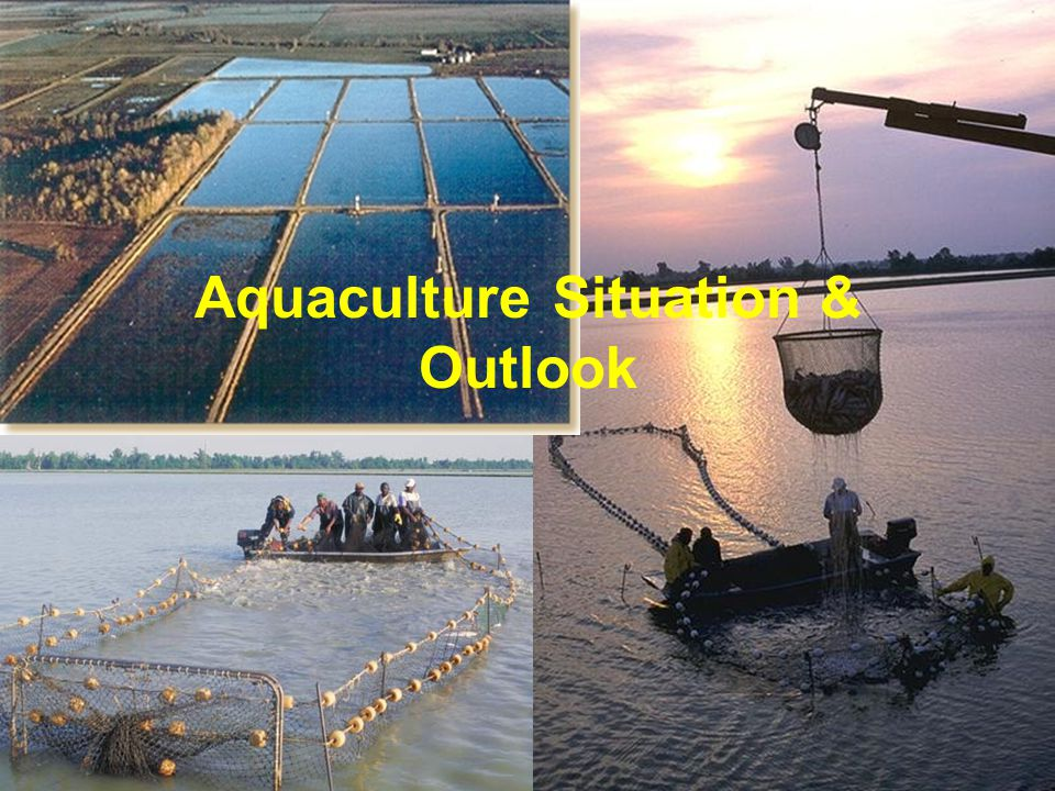 Aquaculture Situation & Outlook