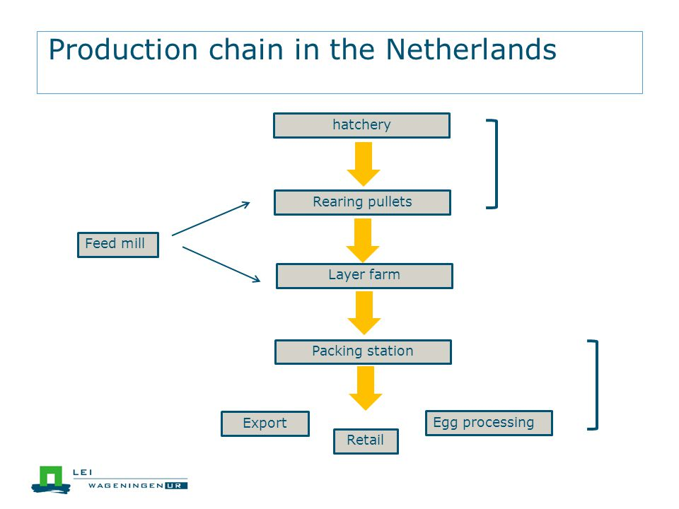 Production chain in the Netherlands hatchery Rearing pullets Layer farm Packing station Feed mill Retail Export Egg processing