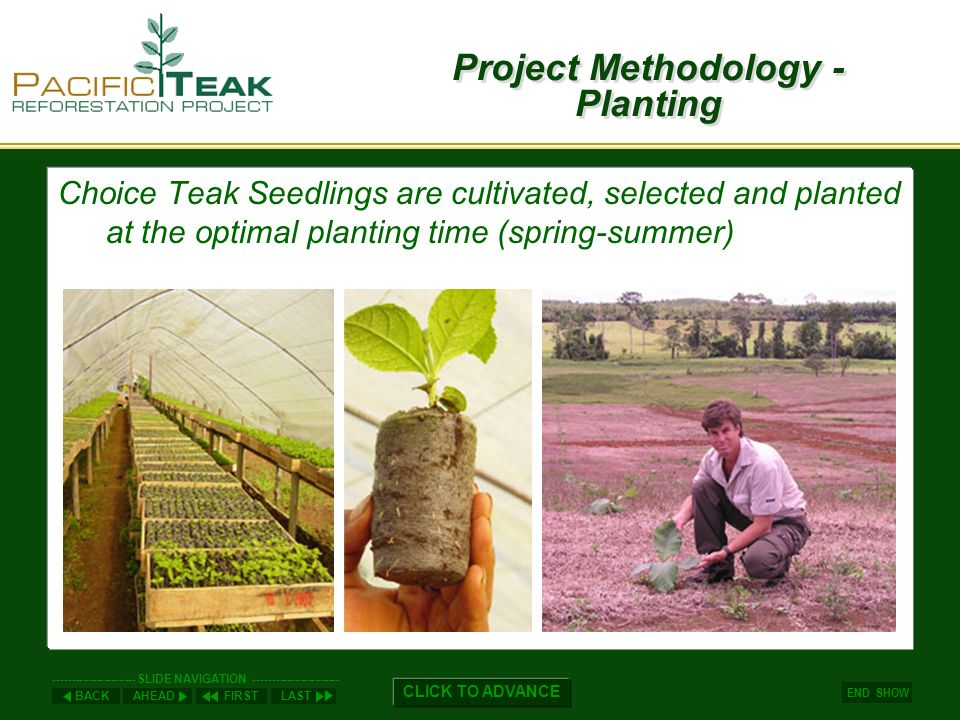 AHEADLASTFIRSTBACK ----------------------- SLIDE NAVIGATION ------------------------ END SHOW CLICK TO ADVANCE Project Methodology - Planting Choice Teak Seedlings are cultivated, selected and planted at the optimal planting time (spring-summer)