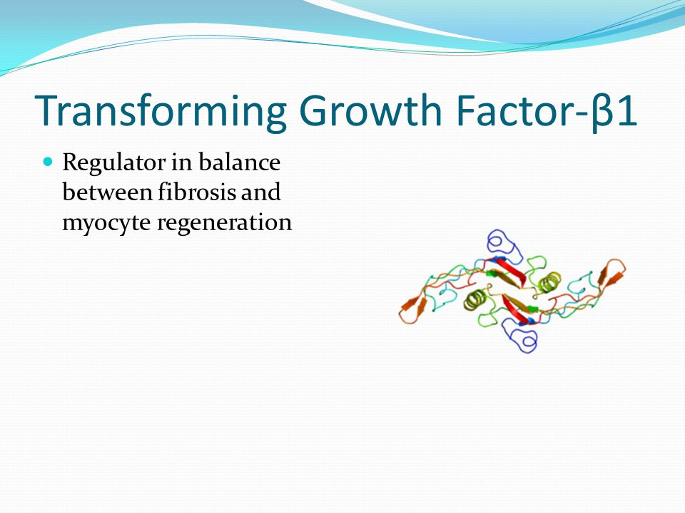 Transforming Growth Factor-β1 Regulator in balance between fibrosis and myocyte regeneration