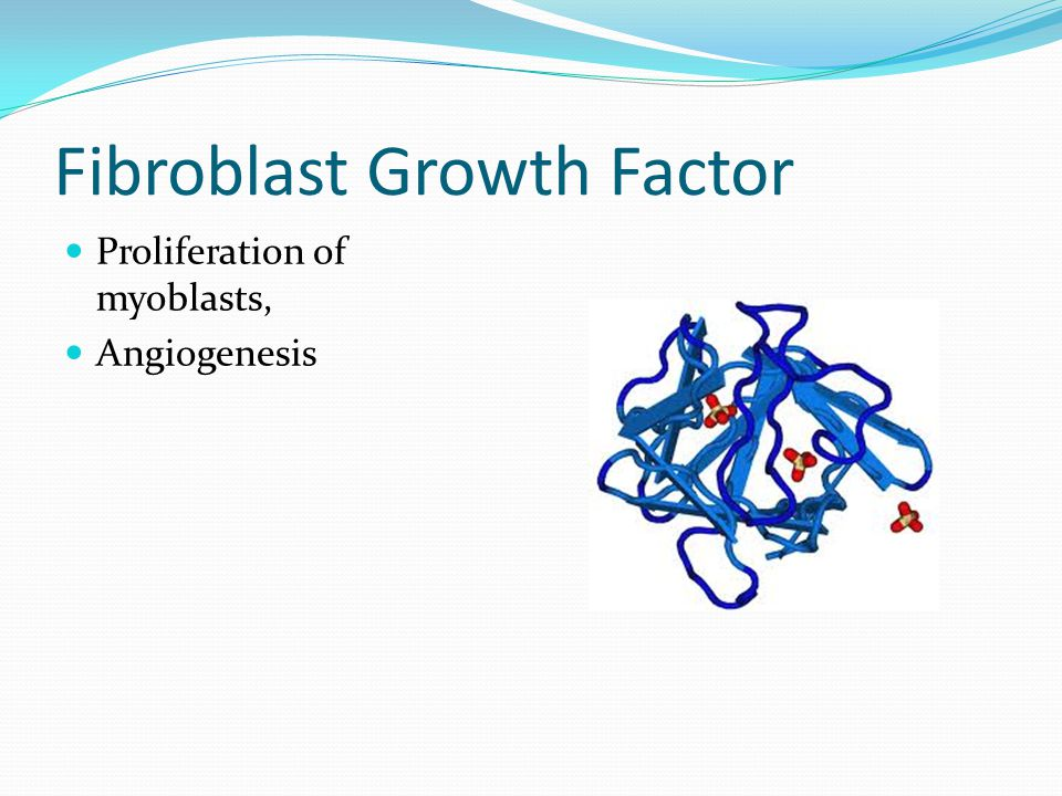 Epidermal Growth Factor Proliferation of mesenchymal and epithelial cells