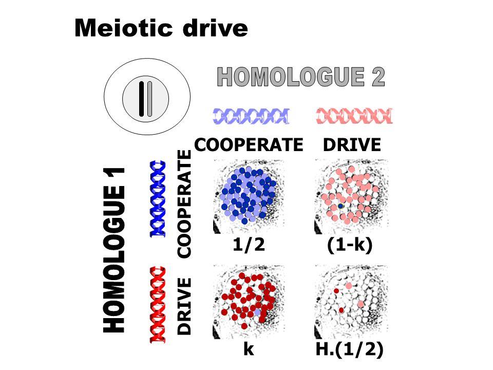 COOPERATEDRIVE COOPERATE DRIVE (1-k)1/2 kH.(1/2) Meiotic drive