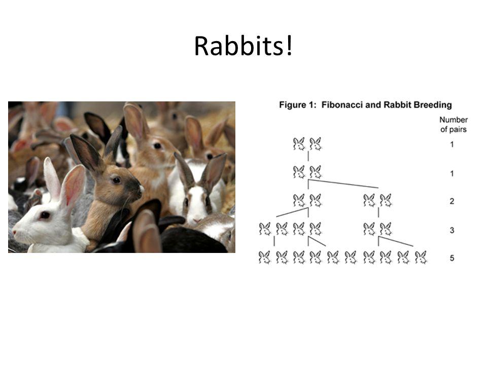Rabbits!
