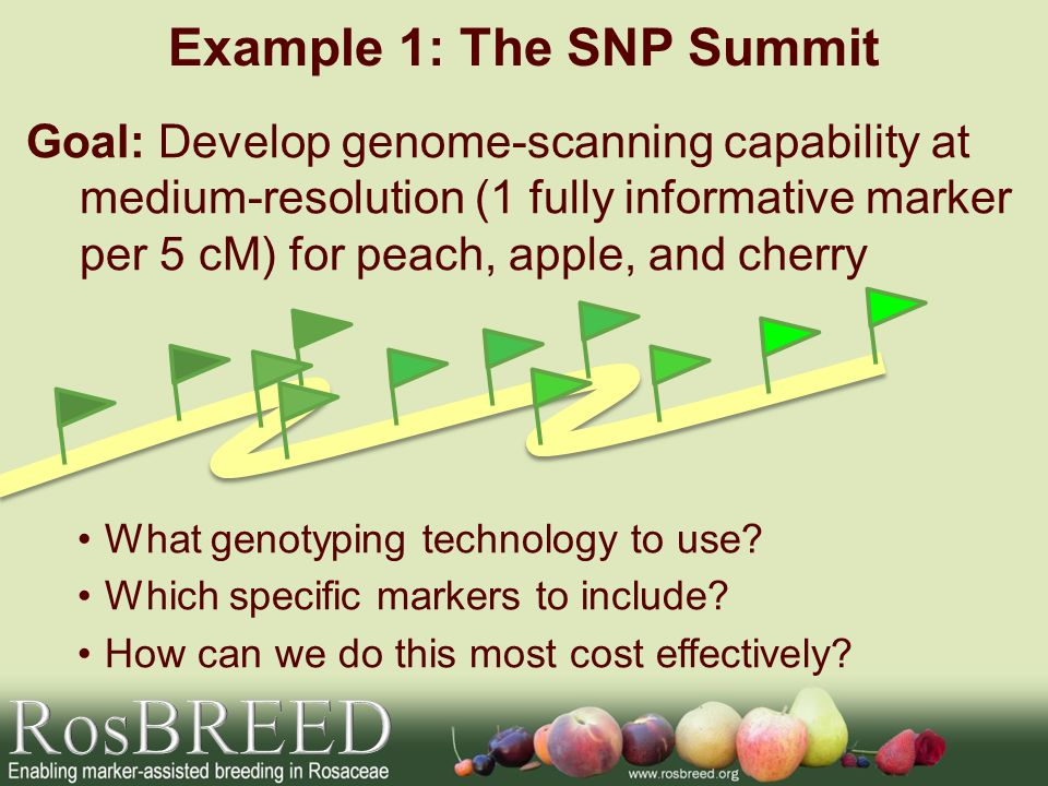 Example 1: The SNP Summit Goal: Develop genome-scanning capability at medium-resolution (1 fully informative marker per 5 cM) for peach, apple, and ch