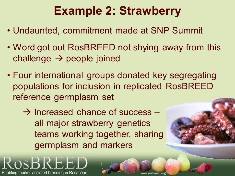Example 2: Strawberry Undaunted, commitment made at SNP Summit Word got out RosBREED not shying away from this challenge people joined Four internatio