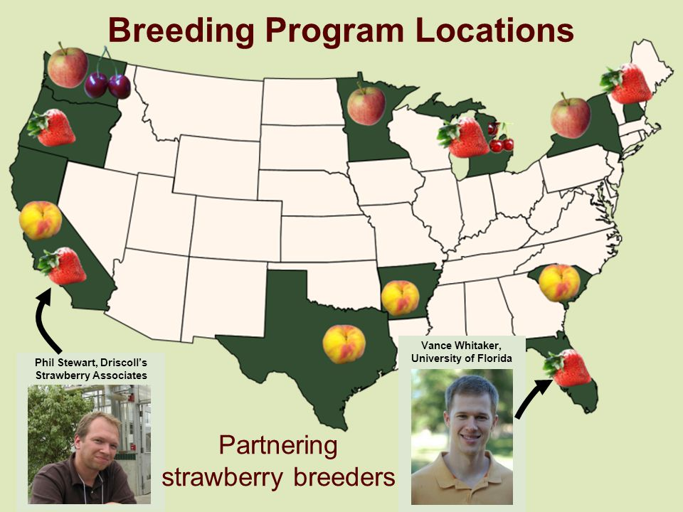 Breeding Program Locations Phil Stewart, Driscolls Strawberry Associates Vance Whitaker, University of Florida Partnering strawberry breeders