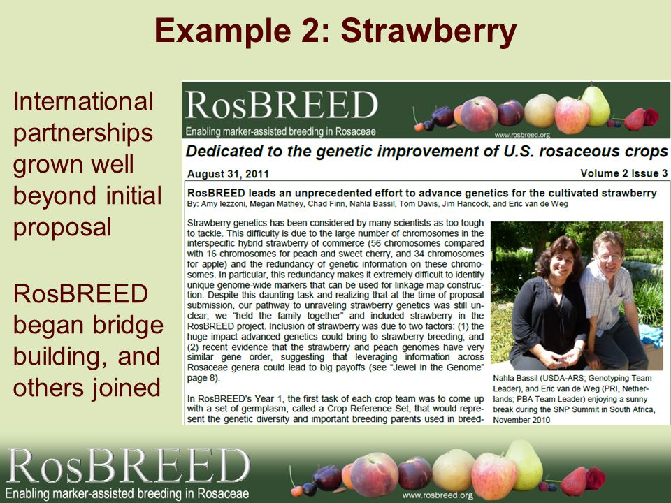 Example 2: Strawberry International partnerships grown well beyond initial proposal RosBREED began bridge building, and others joined