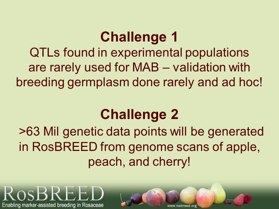 Example 2: Strawberry Undaunted, commitment made at SNP Summit Word got out RosBREED not shying away from this challenge people joined Four international groups donated key segregating populations for inclusion in replicated RosBREED reference germplasm set Increased chance of success – all major strawberry genetics teams working together, sharing germplasm and markers