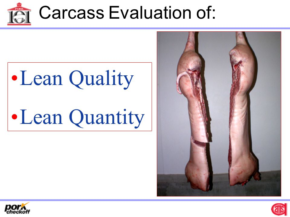 Lean Value Pricing On-Line Methods and Measurements MRI – Entire Carcass or Primals (TOBEC)