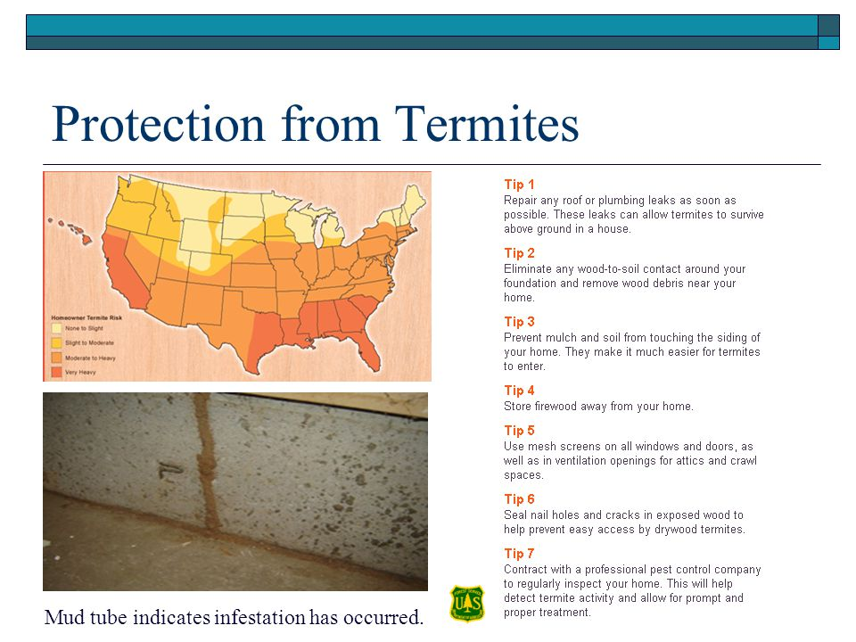 Protection from Termites Mud tube indicates infestation has occurred.