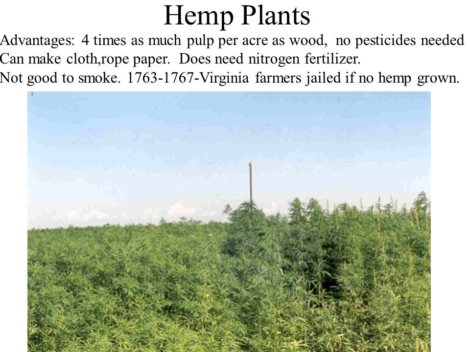 Hemp Plants Advantages: 4 times as much pulp per acre as wood, no pesticides needed Can make cloth,rope paper.