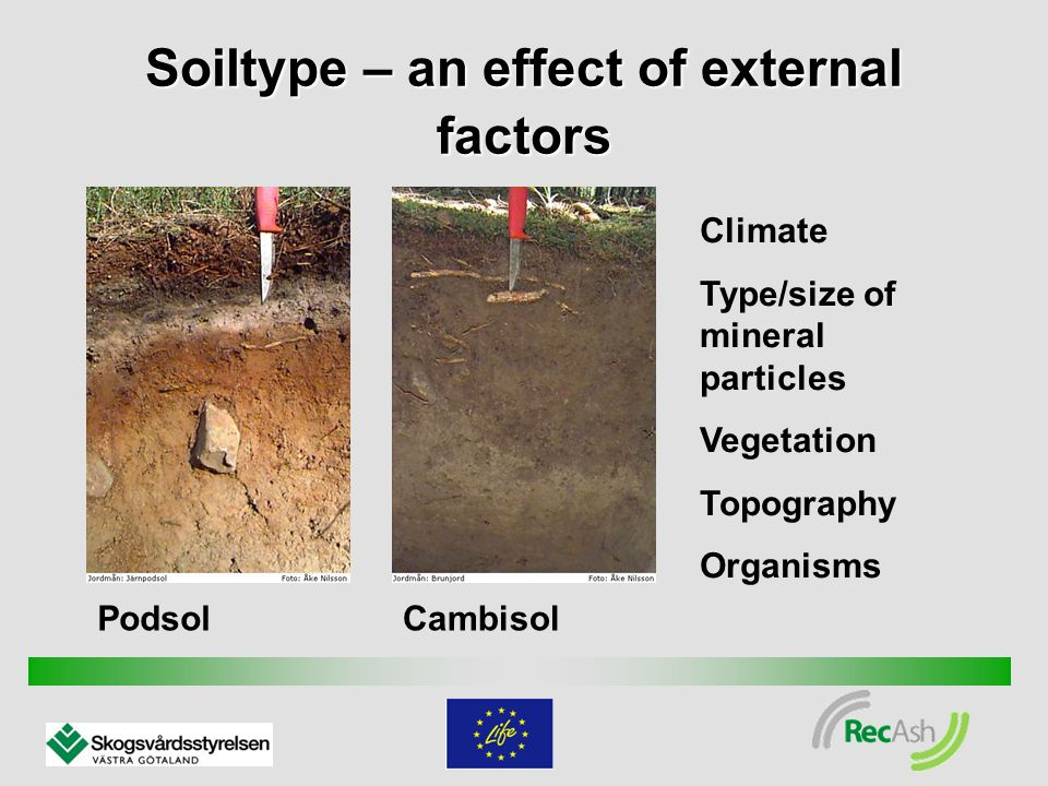 Soiltype – an effect of external factors PodsolCambisol Climate Type/size of mineral particles Vegetation Topography Organisms
