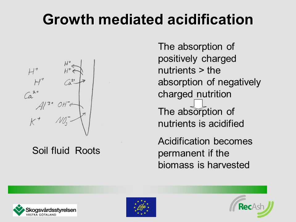 Growth mediated acidification Soil fluid Roots The absorption of positively charged nutrients > the absorption of negatively charged nutrition The absorption of nutrients is acidified Acidification becomes permanent if the biomass is harvested