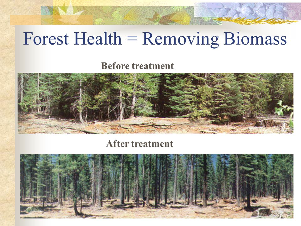 Forest Health = Removing Biomass Before treatment After treatment