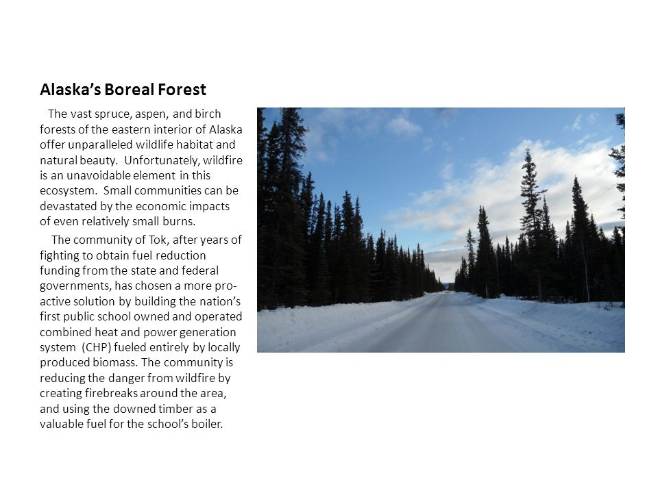 Alaskas Boreal Forest The vast spruce, aspen, and birch forests of the eastern interior of Alaska offer unparalleled wildlife habitat and natural beauty.