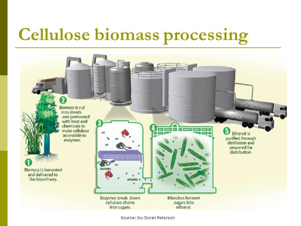 Cellulose biomass processing Source: Joy Doran Peterson