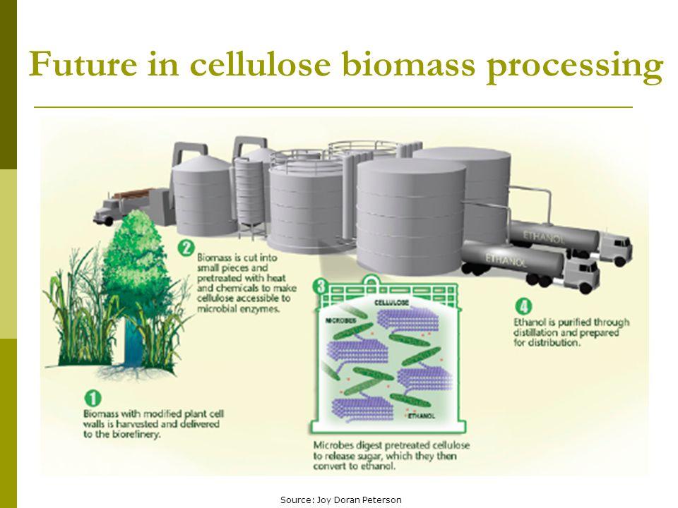 Future in cellulose biomass processing Source: Joy Doran Peterson