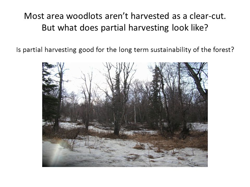 Most area woodlots arent harvested as a clear-cut.