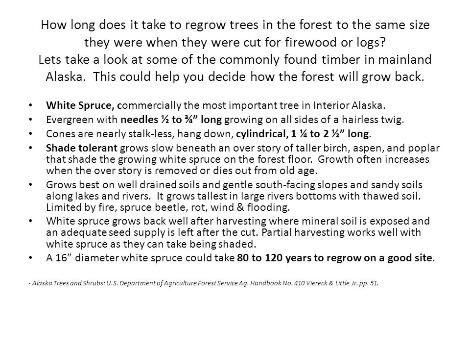 How long does it take to regrow trees in the forest to the same size they were when they were cut for firewood or logs.