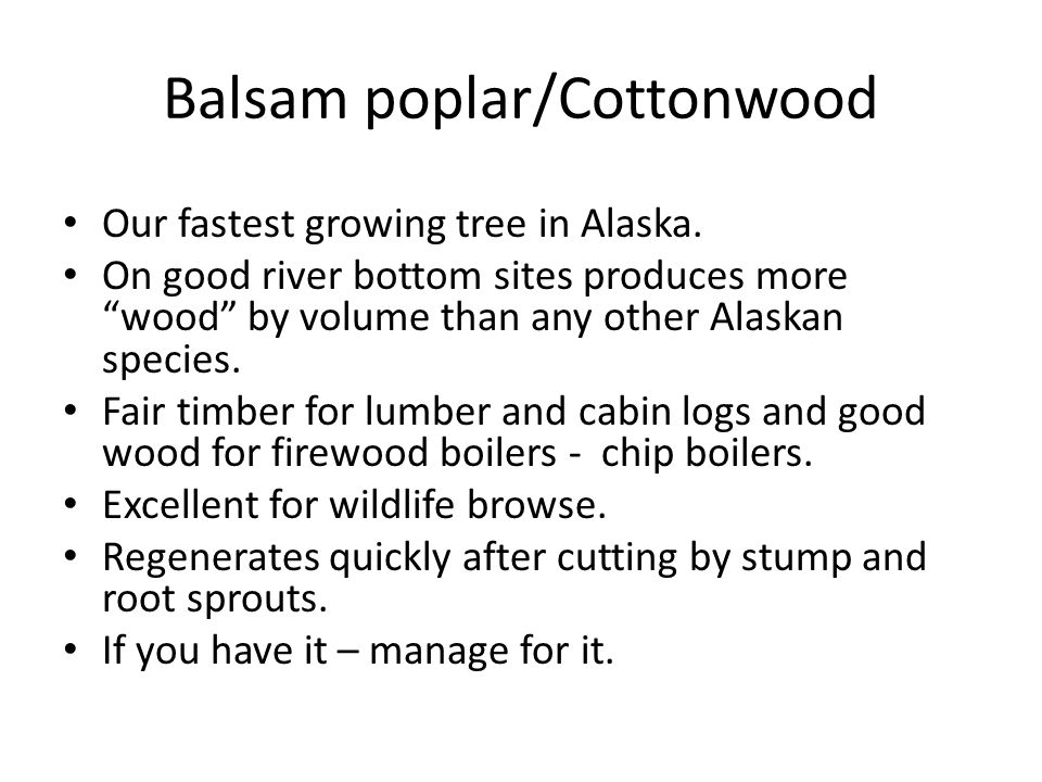 Balsam poplar/Cottonwood Our fastest growing tree in Alaska.