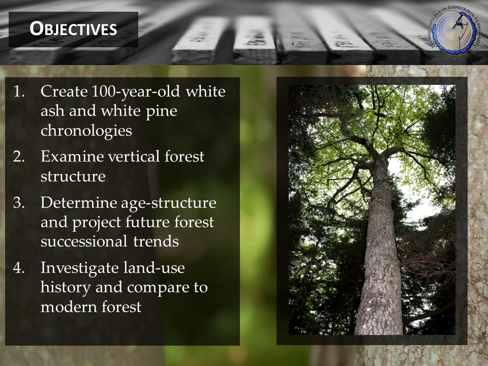 1.Create 100-year-old white ash and white pine chronologies 2.Examine vertical forest structure 3.Determine age-structure and project future forest successional trends 4.Investigate land-use history and compare to modern forest O BJECTIVES