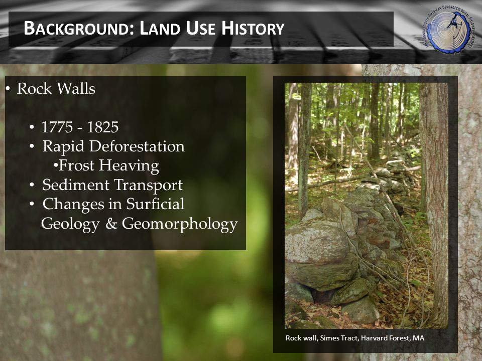 Rock Walls 1775 - 1825 Rapid Deforestation Frost Heaving Sediment Transport Changes in Surficial Geology & Geomorphology Rock wall, Simes Tract, Harvard Forest, MA B ACKGROUND : L AND U SE H ISTORY