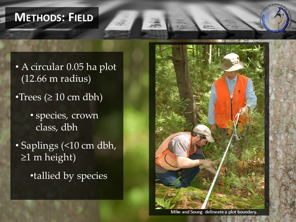 A circular 0.05 ha plot (12.66 m radius) Trees ( 10 cm dbh) species, crown class, dbh Saplings (<10 cm dbh, 1 m height) tallied by species M ETHODS : F IELD Mike and Soung delineate a plot boundary.