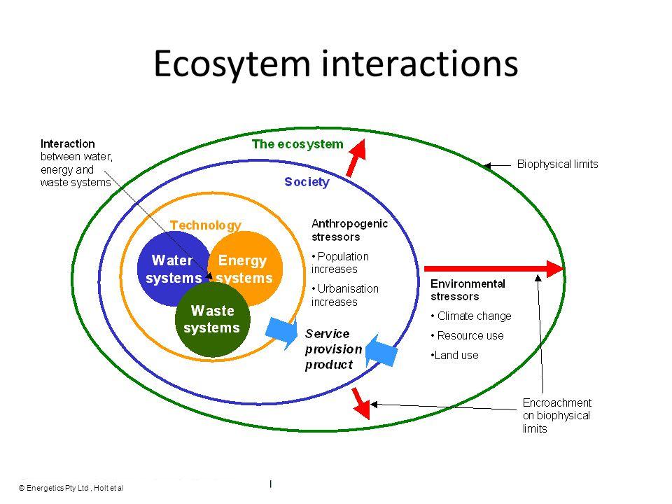 Ecosytem interactions © Energetics Pty Ltd, Holt et al