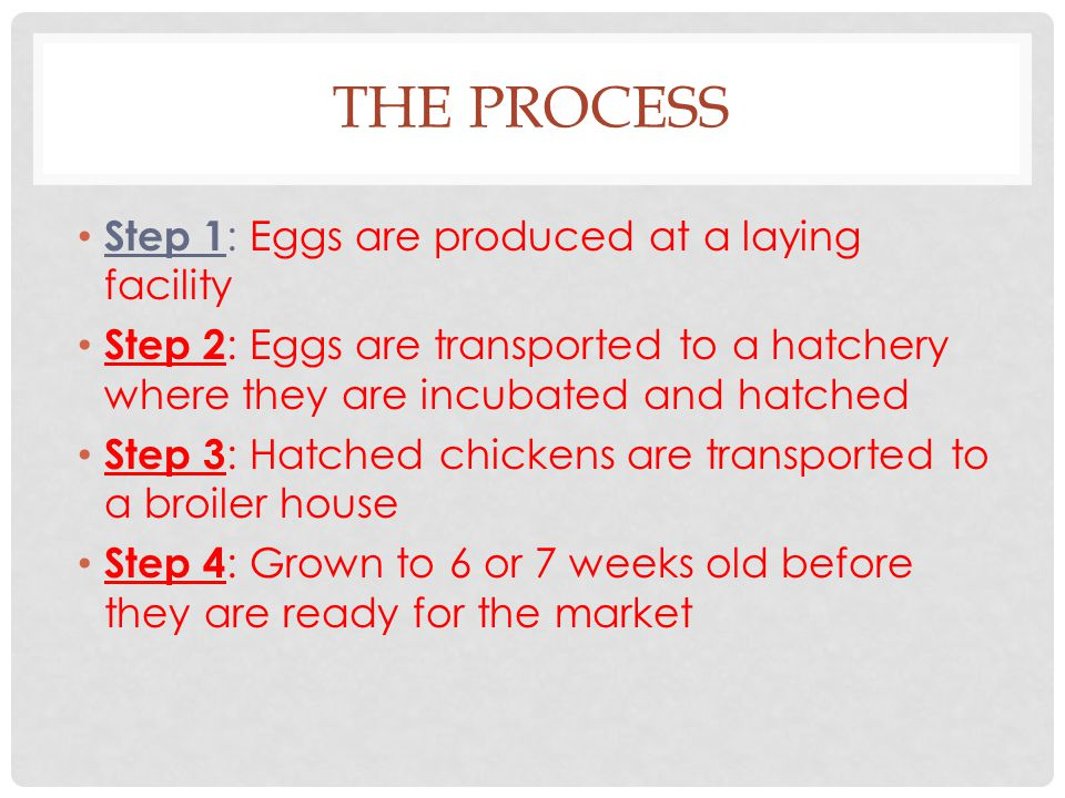 THE PROCESS Step 1 : Eggs are produced at a laying facility Step 2 : Eggs are transported to a hatchery where they are incubated and hatched Step 3 :