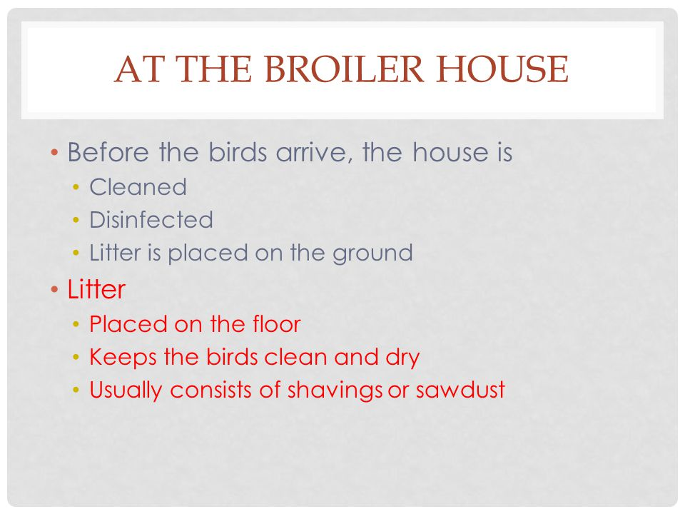 AT THE BROILER HOUSE Before the birds arrive, the house is Cleaned Disinfected Litter is placed on the ground Litter Placed on the floor Keeps the birds clean and dry Usually consists of shavings or sawdust