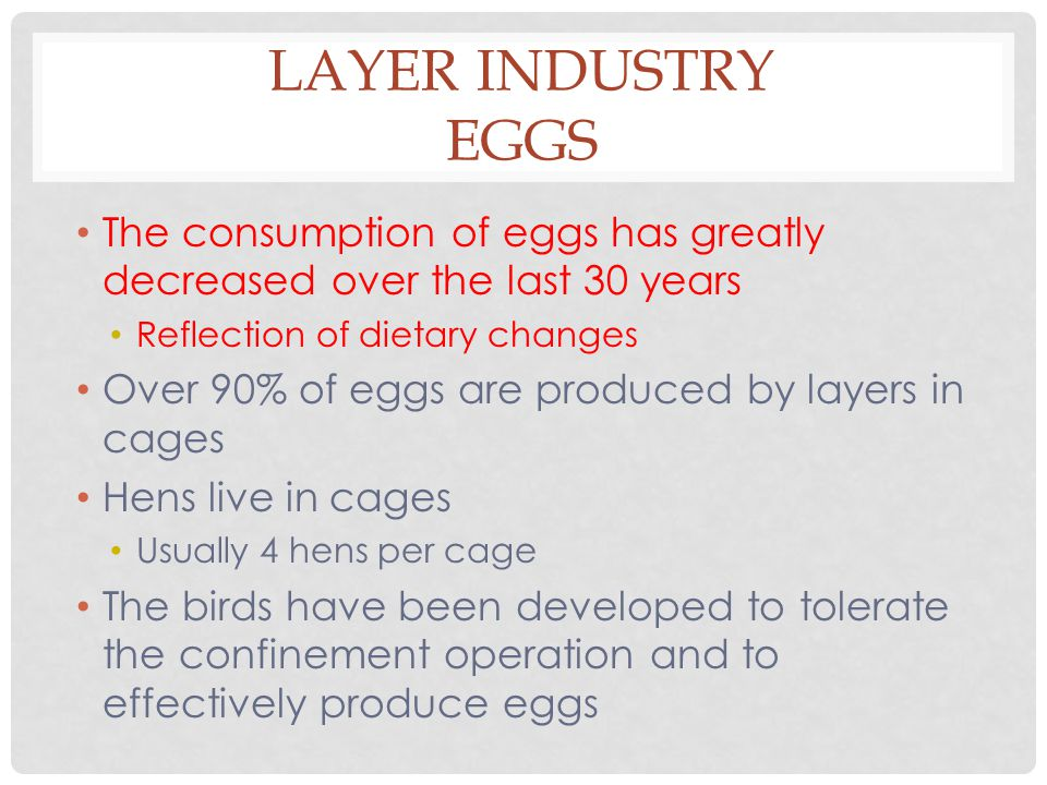 LAYER INDUSTRY EGGS The consumption of eggs has greatly decreased over the last 30 years Reflection of dietary changes Over 90% of eggs are produced by layers in cages Hens live in cages Usually 4 hens per cage The birds have been developed to tolerate the confinement operation and to effectively produce eggs