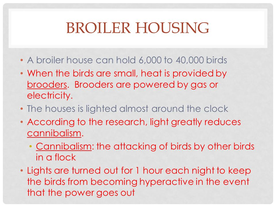 BROILER HOUSING A broiler house can hold 6,000 to 40,000 birds When the birds are small, heat is provided by brooders.