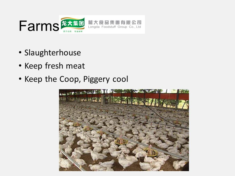 Farms Slaughterhouse Keep fresh meat Keep the Coop, Piggery cool