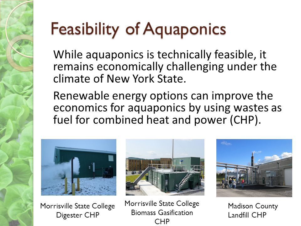 Feasibility of Aquaponics While aquaponics is technically feasible, it remains economically challenging under the climate of New York State.
