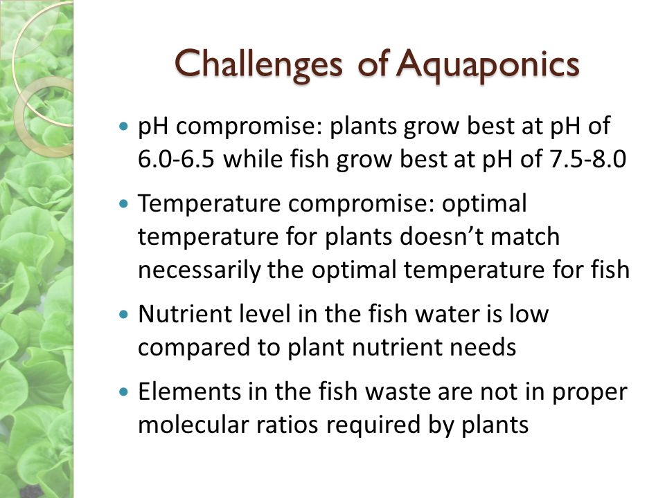 Challenges of Aquaponics pH compromise: plants grow best at pH of 6.0-6.5 while fish grow best at pH of 7.5-8.0 Temperature compromise: optimal temperature for plants doesnt match necessarily the optimal temperature for fish Nutrient level in the fish water is low compared to plant nutrient needs Elements in the fish waste are not in proper molecular ratios required by plants